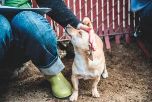 A organização também resgata animais que se encontram em situaçaõ de risco em abrigos superlotados. (Foto: Reprodução / Moncho Camblor)