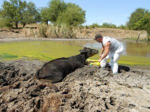 A Code 3 Associates, uma das organizações que fazem parte da fundação de Tony, faz resgates e ajuda animais que sofreram com desastres naturais. (Foto: Reprodução / Facebook Code 3 Associates)