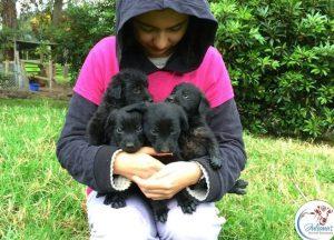Porém, com todo o amor e carinho que estão recebendo no santuário, logo os cães voltaram a confiar em humanos novamente. (Foto: Reprodução / Juliana's Animal Sanctuary)
