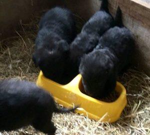 Os cães receberam cuidados médicos e foram levados para o Juliana's Animal Sanctuary. (Foto: Reprodução / Juliana's Animal Sanctuary)