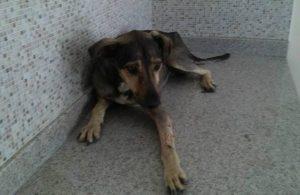 Agora, Ana Maria faz campanha para arrecadar fundos para pagar o tratamento do cão e procura uma família que queira adotar o animal quando ele receber alta. (Foto: Reprodução / Facebook Ana Maria de Barros)