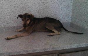 Ana Maria, que retirou o animal do bueiro com a ajuda de uma extensão, imediatamente levou o cão para uma clínica. (Foto: Reprodução / Facebook Ana Maria de Barros)