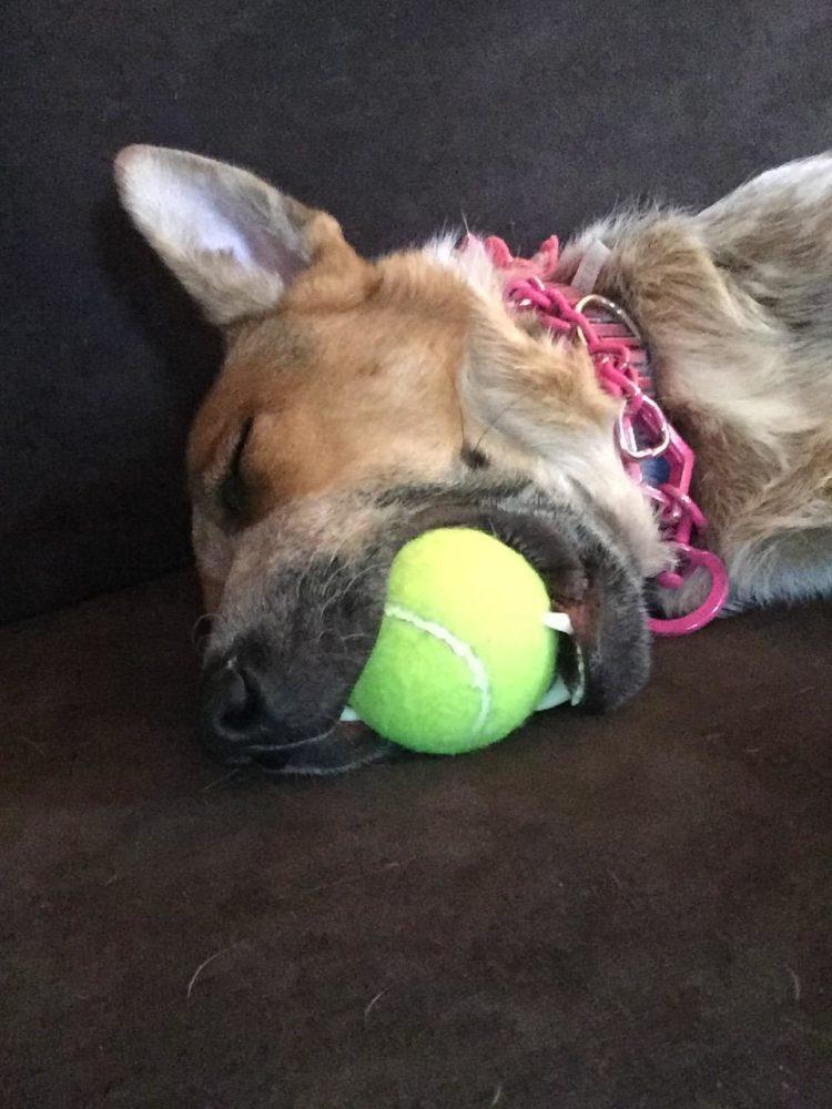 cachorro-brinquedo-03