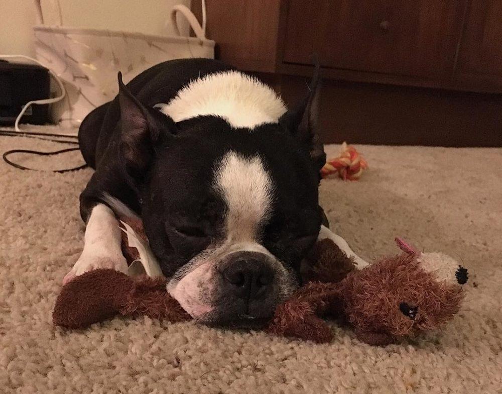 cachorro-brinquedo-07