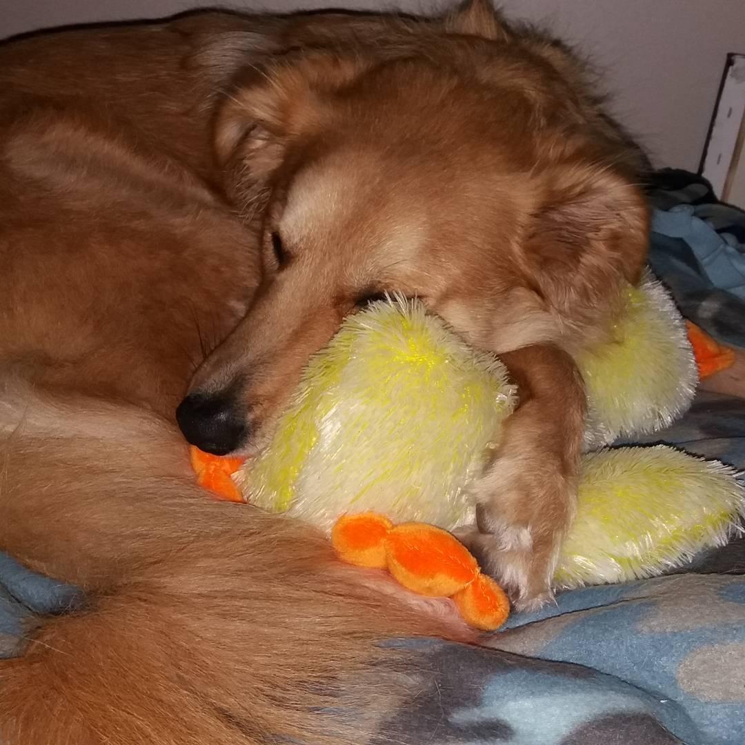 cachorro-brinquedo-08