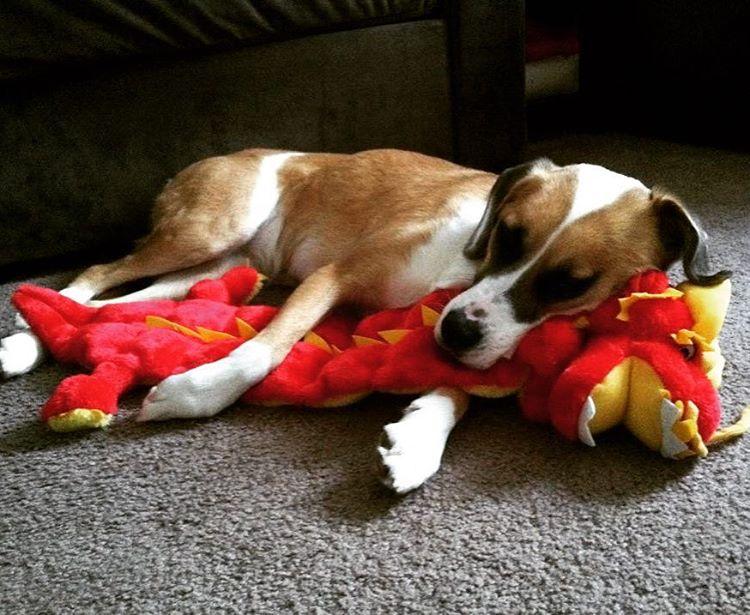 cachorro-brinquedo-10