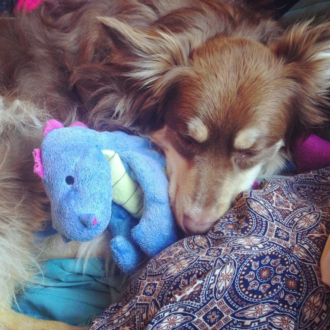 cachorro-brinquedo-11