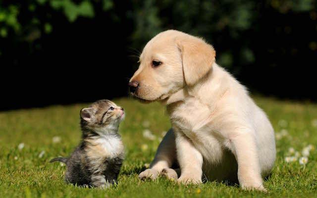 O perfil de tutores de cães e gatos foi traçado. (Foto: Reprodução / pixelstalk.net)