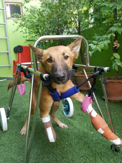 Cola recebeu uma cadeira de rodas. (Foto: Reprodução / The Dodo)
