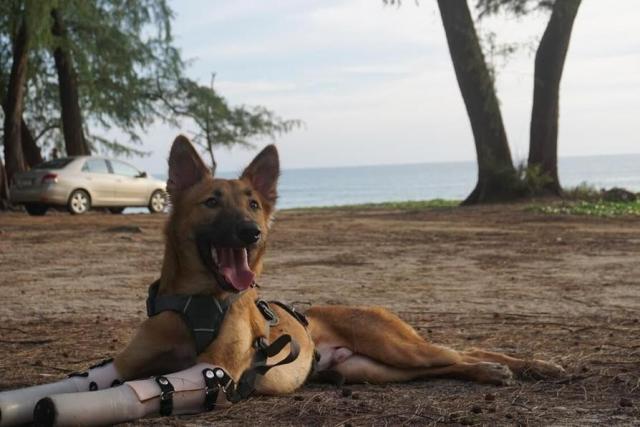 O cão vive em uma ilha tailandesa. (Foto: Reprodução / The Dodo)