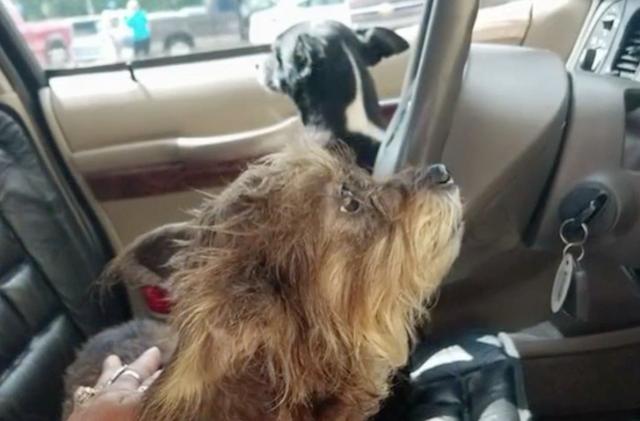 Os cães assumiram a direção do carro! (Foto: Reprodução / Fox 5 San Diego)