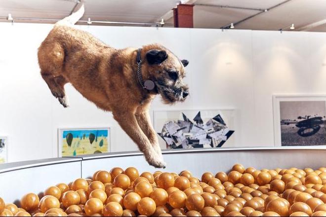 Uma escultura interativa que promete muita diversão para os cães. (Foto: Reprodução / More Than)