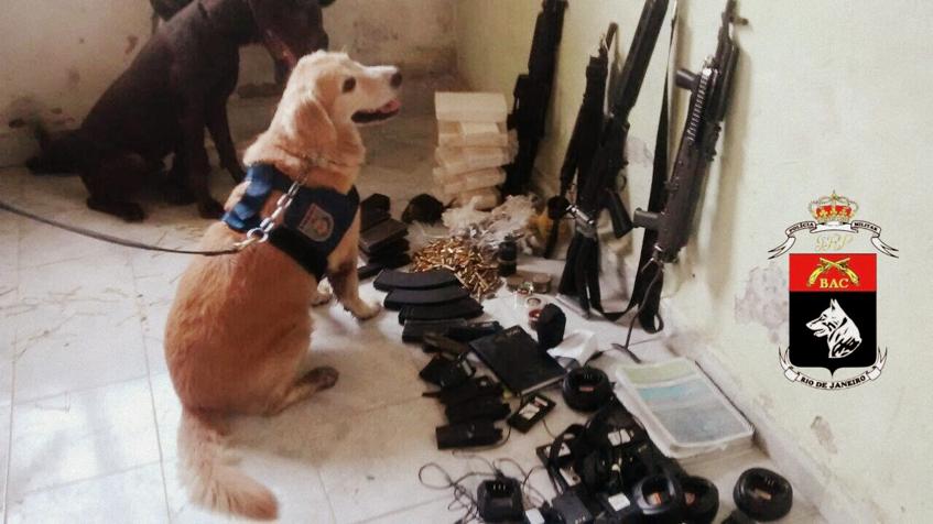 Cadela Luna com material apreendido em operação do BAC.