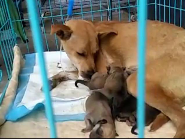 A cachorra e os filhotes estão bem. (Foto: Reprodução / Facebook / Humane Society International)