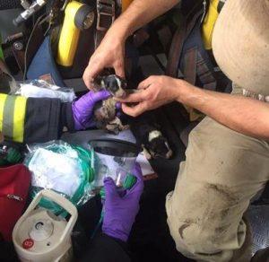 Os animais foram rapidamente resgatados pelos bombeiros, mas infelizmente nem todos resistiram. (Foto: Reprodução / Facebook Newton Abbot Fire Station)