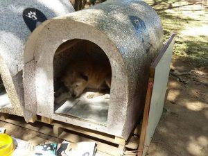 As casas são construídas com ripas de madeira e embalagem cartonada reciclada. (Foto: Reprodução / Leticia Ferrari)