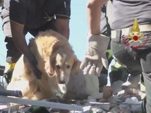 Cão Romeo foi resgatado após passar nove dias debaixo dos escombros. (Foto: Reprodução / Twitter / Vigili del Fuoco)