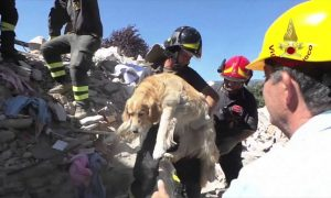 O cão se reuniu com seus tutores logo após o resgate. (Foto: Reprodução / Youtube)