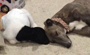 O cão e o cordeiro se conheceram por acaso e se apaixonaram logo que se viram. (Foto: Reprodução / Emily Foster)