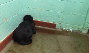 De tão triste ela só ficava num cantinho de frente para a parede. (Foto: Reprodução / Tammy Graves)