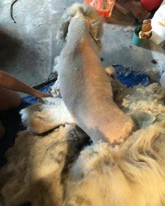 Com a tosa, o cão se livrou de quase 15 kg só de pelos. (Foto: Reprodução / C e Jessica Kincheloe)