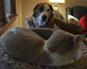 Ao conhecer o gatinho da irmã de sua mãe, Pippy ficou simplesmente obcecada pelo animal. (Foto: Reprodução / Danielle Skinner / Stephanie Skinner)