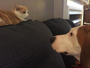 Pippy estava apaixonada pelo gato Pooh e queria estar sempre perto dele. (Foto: Reprodução / Danielle Skinner / Stephanie Skinner)