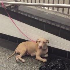 Em meio a correria das pessoas pe local, a cadela levou mais de uma hora para ser notada e receber ajuda. (Foto: Reprodução / Sarah Borok)