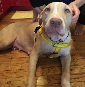 Betsey é uma cadela muito doce e se deu muito bem com todos no abrigo. (Foto: Reprodução / Mr. Bones & Co.)