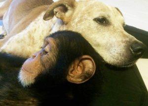Agora, Princess ajuda animais que também estão precisando de ajuda para sobreviver. (Foto: Reprodução / Jenny Desmond)