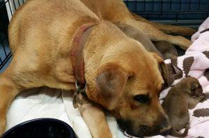 Os cães foram resgatados pelo pessoal da Faithful Friends Animal Sanctuary (Foto: Reprodução / FFAS)