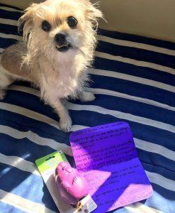 O brinquedo era roxinho, da mesma cor que o cartão que ela tinha comido.(Foto: Reprodução / Facebook Catioro Reflexivo)