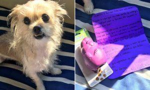 A Belinha comeu o cartão do seu tutor Walter e ganhou da empresa do cartão um brinquedinho só para ela. (Foto: Reprodução / Facebook Catioro Reflexivo)