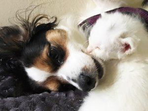 Coconut adora dormir com Bitsy e o amor entre as duas é bem grande. (Foto: Reprodução / Naples Cat Alliance)