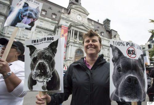 Diversas manifestações já foram feitas em Montreal por amantes e criadores de Pit Bulls e de outras raças consideradas violentas. (Foto: Reprodução / The Huffington Post Canada / CP)