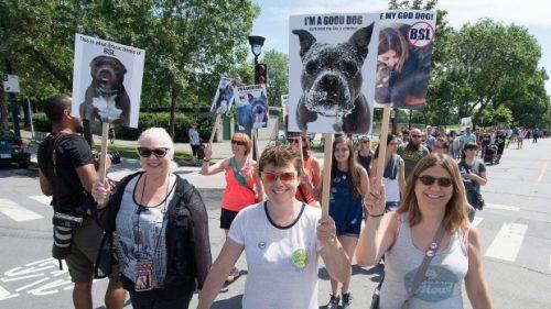 A reação e a revolta contra a lei também estão sendo grandiosas. (Foto: Reprodução / The Canadian Press / Peter McCabe)