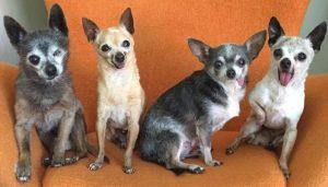 Os quatro animais se tornaram melhores amigos e adoram ficar juntos. (Foto: Reprodução / Julie Docherty)