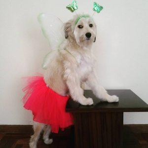 A página da cadelinha também traz postagens bem divertidas. (Foto: Reprodução / Facebook Pérola Carolline)