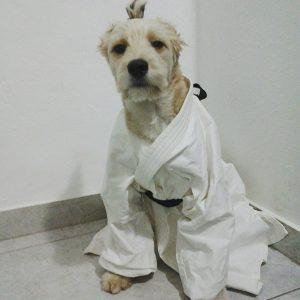 A cadelinha pronta para uma aula de Judô. (Foto: Reprodução / Facebook Pérola Carolline)