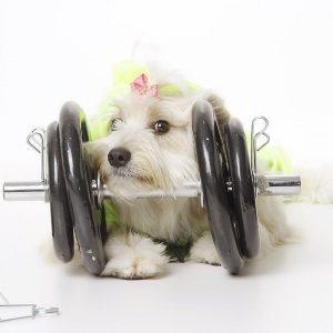 Pérola Carolline é a cadelinha musa fitness do Instagram. (Foto: Reprodução / Facebook Pérola Carolline)