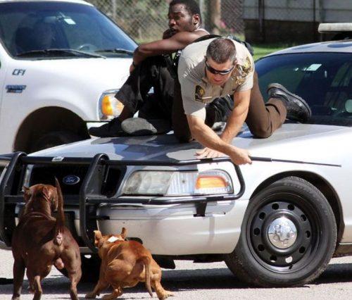 utilizou o seu cassetete para bater no carro e, com isso, tentar distrair os cães até o controle de animais chegar ao local. (Foto: Reprodução / El Reno Tribune)