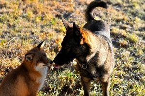 Pelas formas podemos perceber como a amizade entre eles é forte e o tamanho do amor que um sente pelo outro. (Foto: Reprodução / Facebook Torgeir Berge)