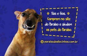 Também é possível ajudar a Paraíso dos Focinhos através do e-commerce da associação. (Foto: Reprodução / Facebook Paraíso dos Focinhos)