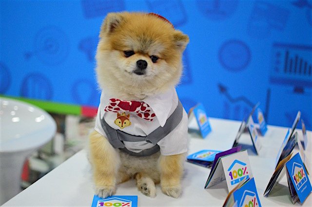 Esse é o famoso Cookie. (Foto: Karina Sakita)