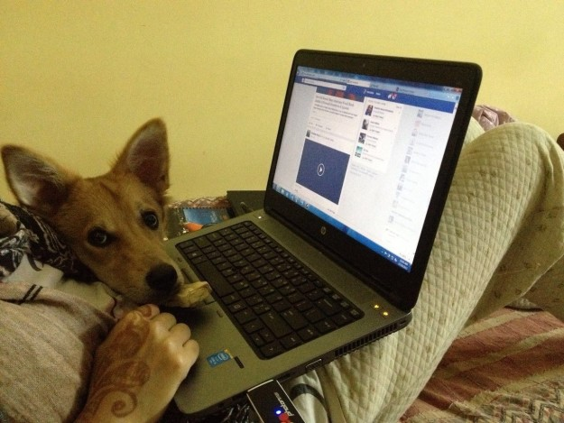 Essa é a cachorra Lucy. (Foto: Reprodução / BuzzFeed)