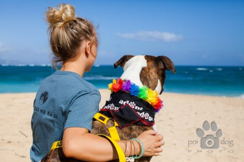 Os passeios podem ser realizados todas as quartas e sextas, e os animais podem ficar fora a partir das 10 da manhã até três horas da tarde. (Foto: Reprodução / Maui Humane Society)