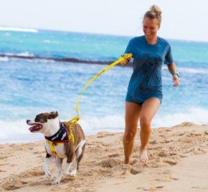 Objetivo do programa é conseguir retirar um pouco os cães do ambiente do abrigo e socializar mais. (Foto: Reprodução / Maui Humane Society)