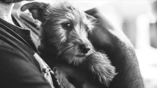 A cadelinha Lua e Luiz se conheceram por acaso e o amor entre eles nasceu imediatamente. (Foto: Reprodução / John Hwang)