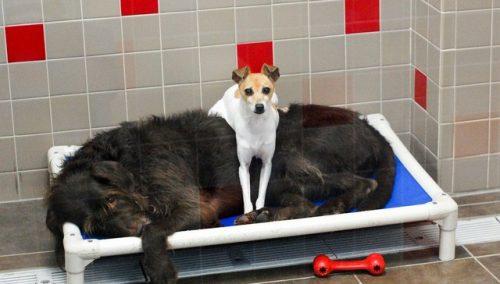 E é assim que eles sempre são encontrados, grudados. (Foto: Reprodução / Animal Rescue League of Iowa)