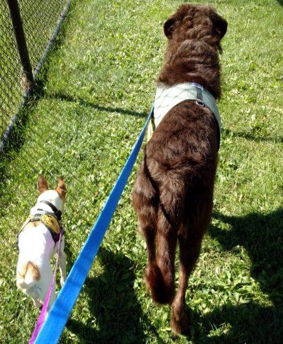 Os dois amigos também gostam de passar lado a lado. (Foto: Reprodução / Animal Rescue League of Iowa)